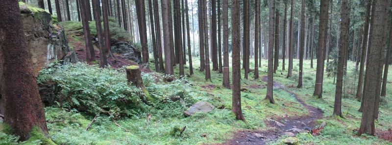The forest: A trail in the TrailCenter Rabenberg.